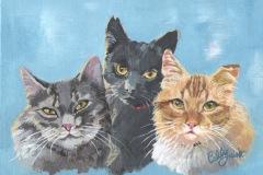 Cat Triple portrait